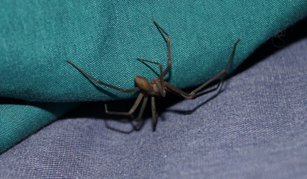 photo de araignée rah3d